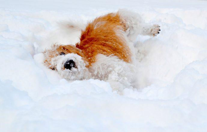 Hitta rätt snöboll