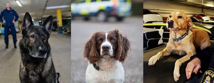 De får utmärkelsen Årets polishund