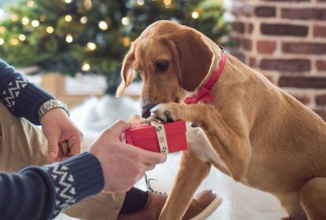 Hundratals hundar kommer bli sjuka i jul
