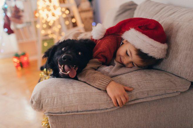 Tävla med bästa bilden på din hund