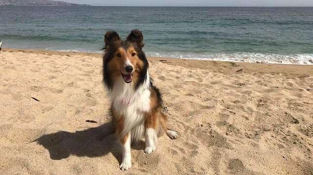 Hunden Leela fortfarande borta