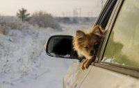 Hund i bil om vintern – tänk på detta