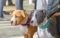 Kamphundar, förbjuda eller förstå?