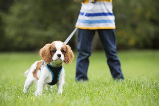 Vem går ut med hunden?