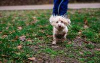 Tävla med din gladaste hundbild
