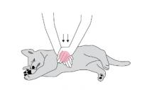 Första hjälpen för skadade hundar
