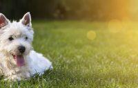Var tionde hund lider av allergi – så vet du om din hund är drabbad