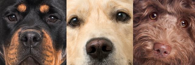 Varje dag dödas eller skadas minst tre hundar i trafiken