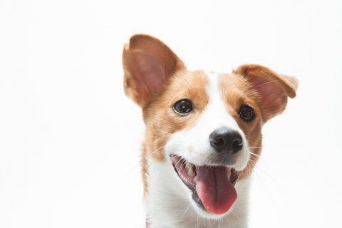 6 korta om hundens hörsel