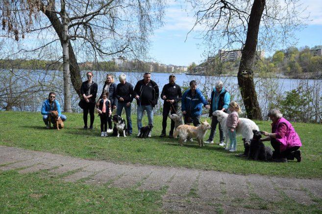 Hundar Utan Hems hundpromenad