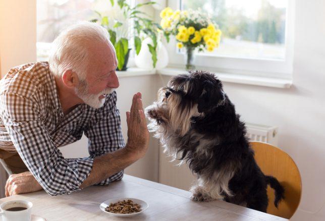 Mer hund i vård, skola och omsorg