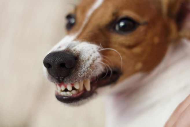 Har du gjort slut med någon på grund av en hund?