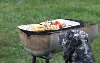 Grillväder ikväll – men låt inte hunden smaka!