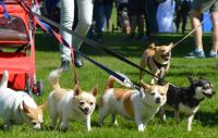 Agria Hundpromenad – här går vi tillsammans i år