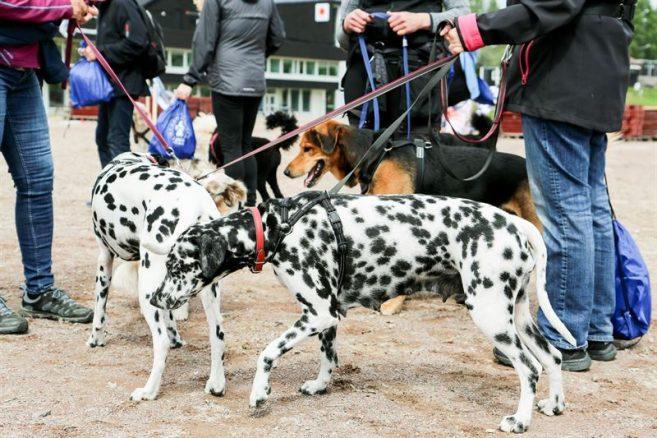 Över 5000 i rekordstor hundpromenad