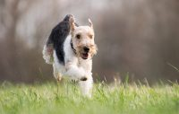 Skydda hunden mot fästingar