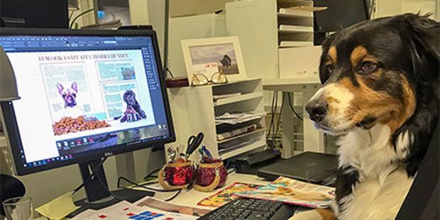 Ta med hunden till jobbet