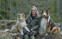 Kalle, collie, fyra månader, ska bli tävlingshund