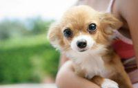 Vanligaste dödsorsakerna för hund