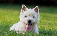 Överhettning största sommarfaran för hundar