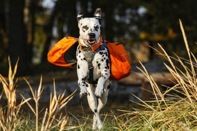 Ut och vandra med hunden