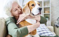 Att tänka på om du ska lämna bort din hund