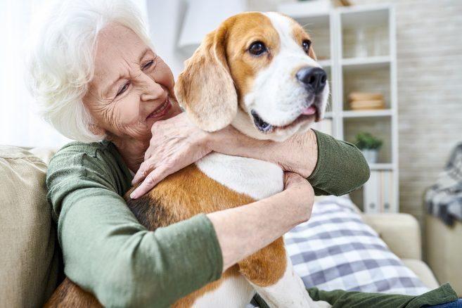 Därför gör oss hunden gott!
