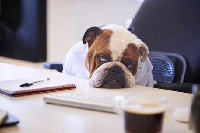 Skulle du ge din hund antidepressiva?