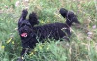 Var din hund den gladaste?