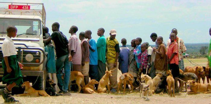 I kampen mot rabies