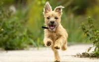 Vilka är de populäraste hundnamnen i Europa?