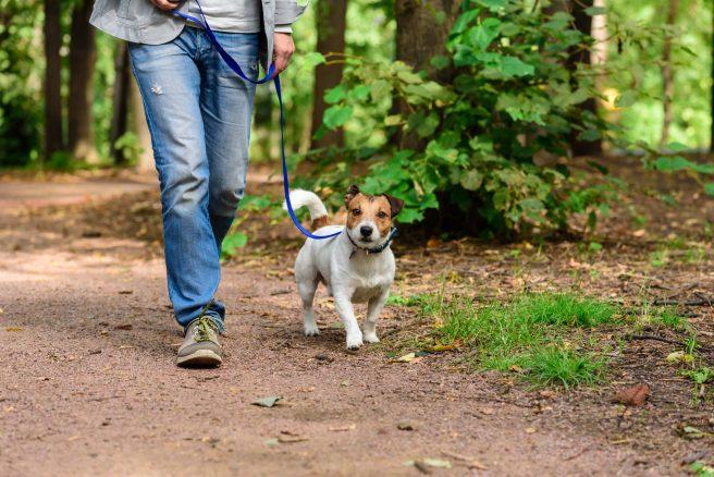Den mystiska hundsjukdomen i Norge