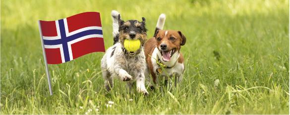 Norska hundar får tävla i Sverige igen