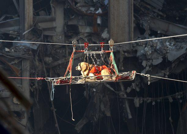 Räddningshundar i USA – arvet efter 9/11