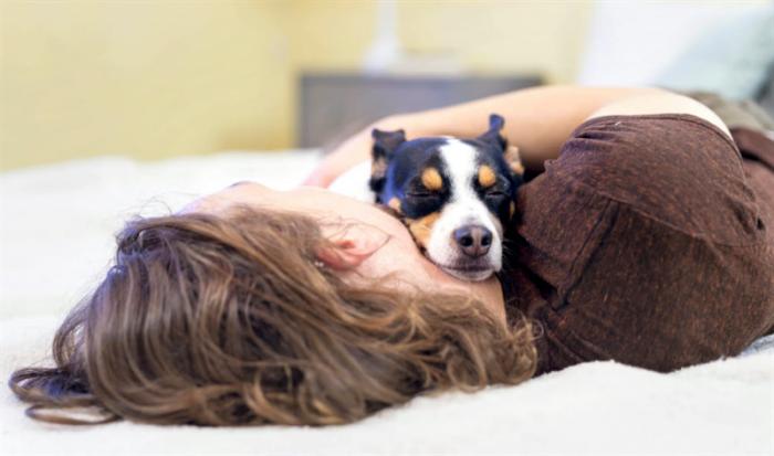 Kraftig ökning av juvertumörer på hundar