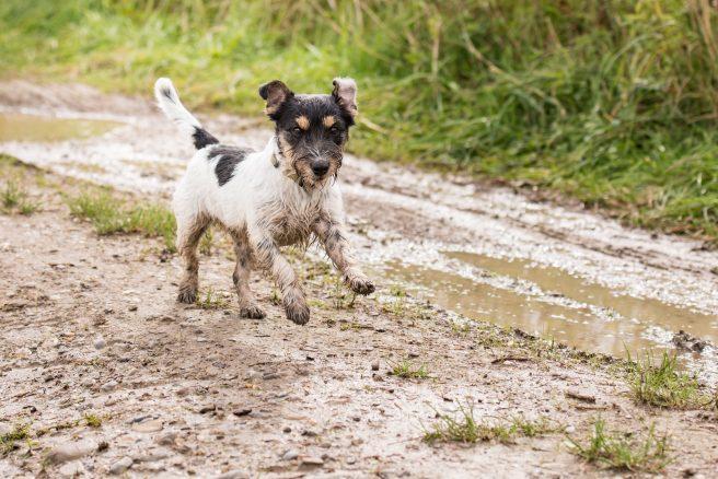 6 skäl att älska hundpromenader