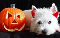 Häng med på Halloween-promenad med vovven