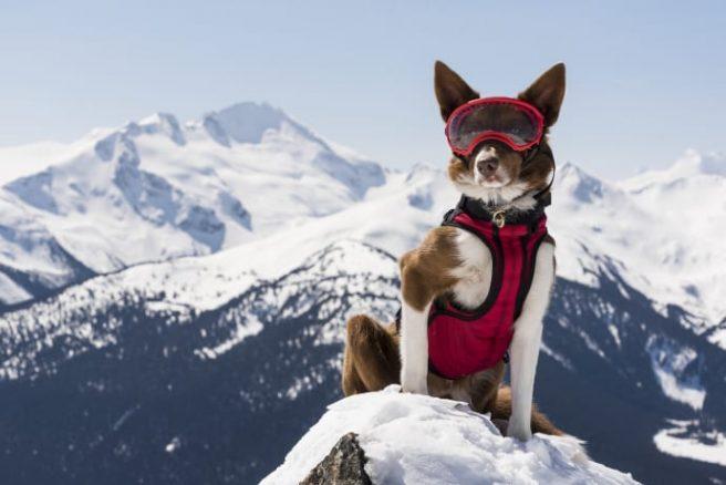 Är din hund en superhund?
