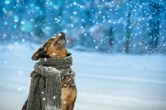 Är din hund Månadens sötnos i Härliga Hund?