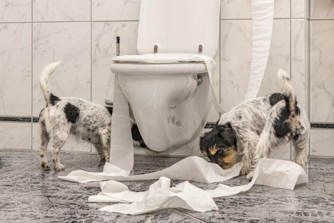 Är ditt hem hundsäkert?