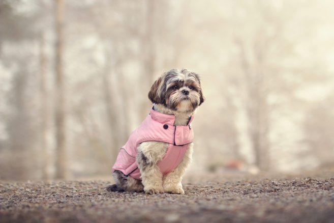 Min hund vill inte ha kläder på sig
