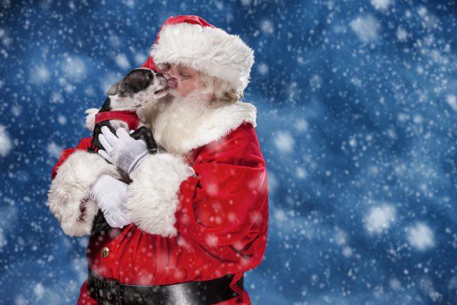 Vilken är din finaste julbild med din hund?