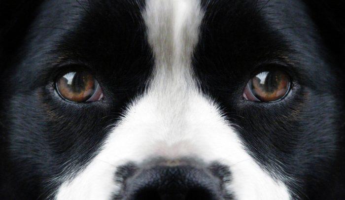 Så här funkar hundens syn