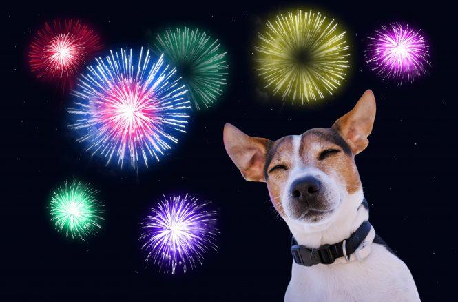 Nyårsraketer – så kan du träna hunden