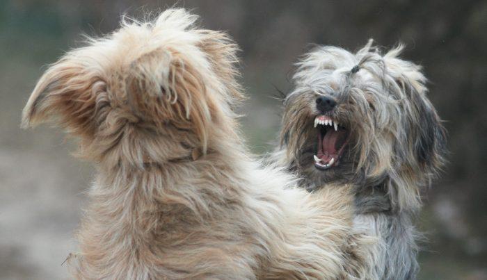 Var tredje hund biten av annan hund