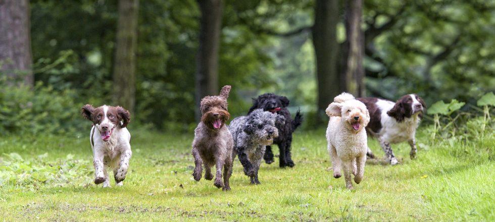 Vässa hundkunskaperna