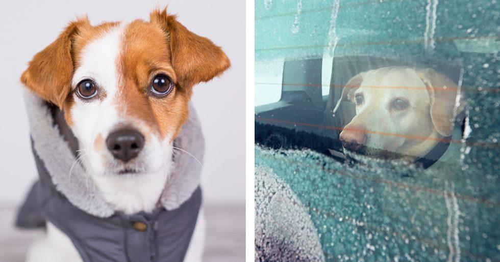 Hund och vinter: 9 saker att tänka på