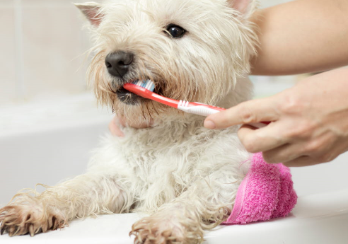 Hund borstar tänderna
