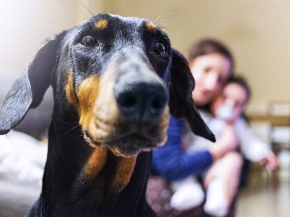 Hundar kan känna doften av rädsla