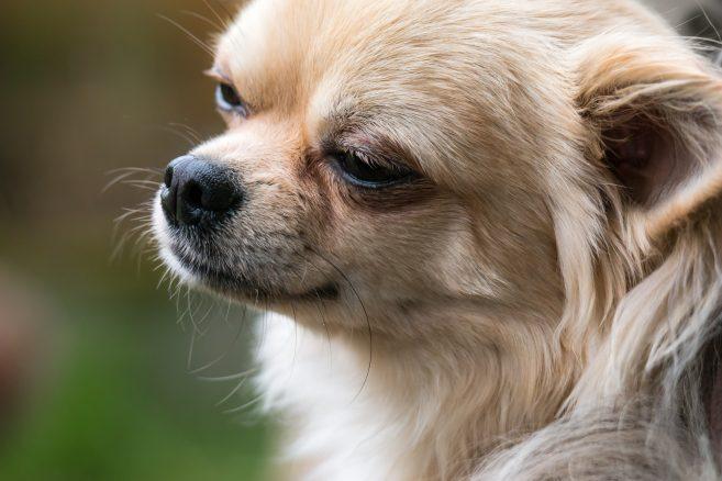 Hundar sjuka av bröd